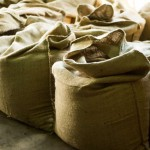 Sumatra Coffee in Burlap Sacks