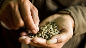 Sumatra Coffee in Good Hands